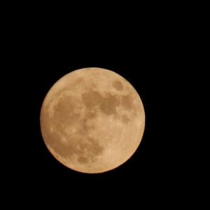 中秋の名月(昨日)