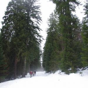 ほとんどの木は「植林木」です