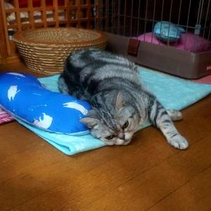 猫が落ちている、あるある