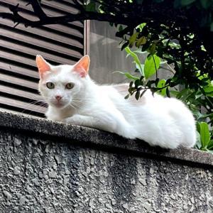 白いヤモリちゃん