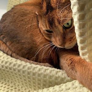 陽当たり良好すぎて世紀の美女猫がアホ面をかましてしまう件