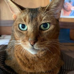 信じられないほど優しい猫の話し 2