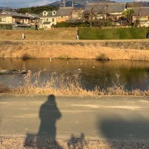 今日は やっぱりシクロクロスバイク 「ルイガノ号」 ~賀茂川をのんびりぶらぶら~