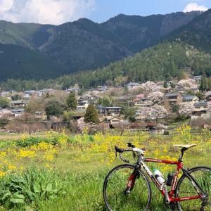 今日は やっぱりロードバイク「ピナレロ号」 大原は桜満開