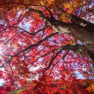 里山の秋(大内・東由利)
