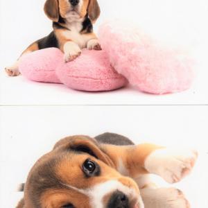 THE DOG撮影写真 エリーちゃん 今日の犬舎 ふく君ベッキーさん