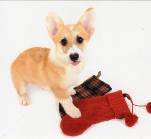 THE DOG撮影写真 今日の犬舎6/18 訃報 余談
