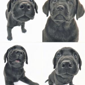THE DOG撮影写真 お便り 今日の犬舎6/23 余談