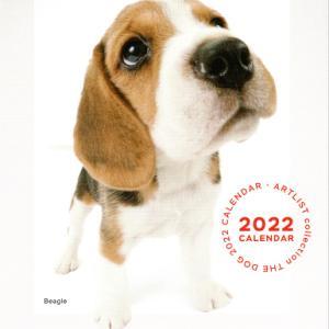☆今日の犬舎☆ 9/21 <THE DOG 2022 CALENDAR、子犬達>