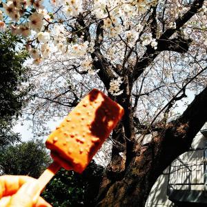 [明治アイス マロンリッチ]栗が多めに入っております♡お花見といえばアイス