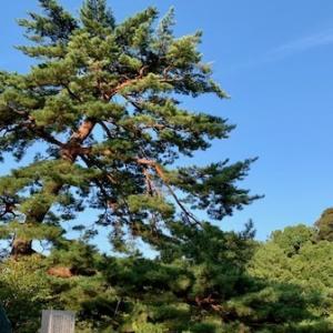 橿原神宮~奈良公園~東大寺~依水園~久々に歩きましたー!