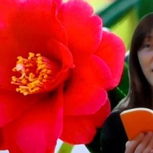 夏目漱石『草枕』を読んでみました!