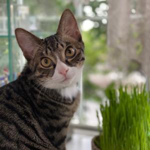 初めての猫草