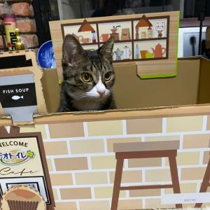 猫カフェとの