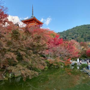 GO  TOで京都へ