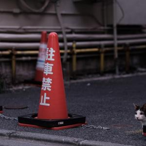 ご無沙汰、猫さん