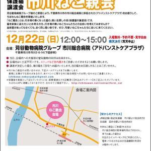 12/22日曜日、ちばわん市川ねこ親会開催!