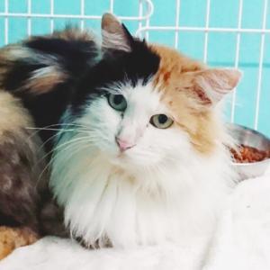 千葉県動物愛護レポート更新されました