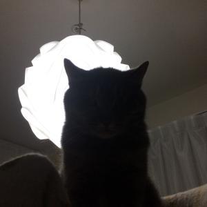 猫の下手くそ写真展