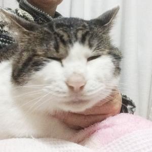 愛情が深い猫リコピン君