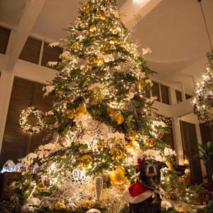 ハワイ一(いち)大好きなクリスマスツリー
