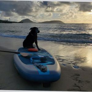 SUPはじめた目的は愛犬と水上散歩♪
