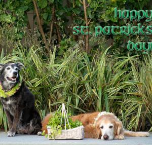 St.Patrick's Day!~緑の日