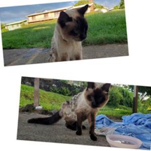 ② ハワイ島へ~イルカに会い・猫のミーちゃんとの出会い
