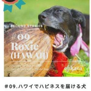 元保護犬ロキシーのセカンドストーリー