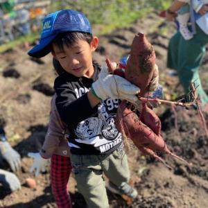 家庭菜園のさつまいも収穫祭!芋掘り体験に♪