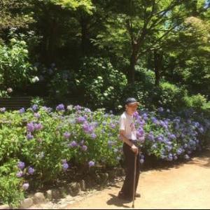 森林植物園の紫陽花を見に…