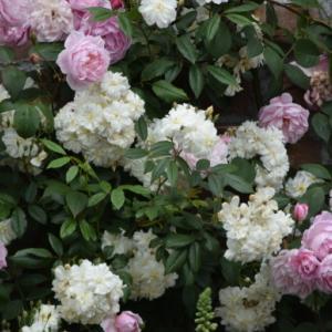 ♪ ダニエル 綺麗なお花がいっぱいだね~(*^。^*) ♪