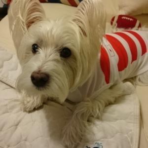 ♪ ダニエル ブログテーマ「愛犬の最高にかわいいショット!!」 で選んでもらえたよ~(#^.^#)  ♪