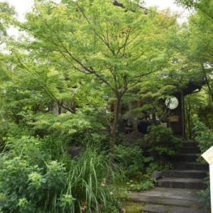 ♪ ダニエル 初めての京都観光~きものフォレスト~(#^.^#)  ♪