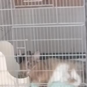 おなかー!!!