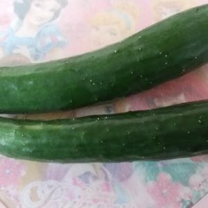 家庭菜園のきゅうり♡