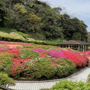 大田和つつじの丘
