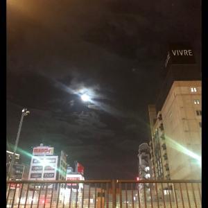 月に吠えない