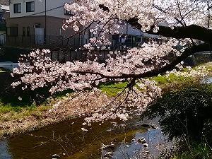 家庭菜園近況2019春