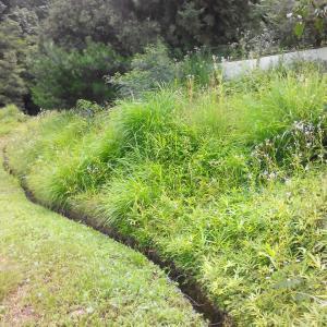 夏はやっぱり草刈り&剪定三昧!