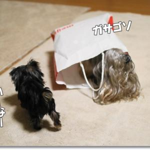 入らずにはいられない!犬専用袋。