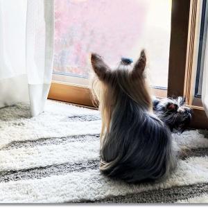 家族を待つ、せつない犬の儀式。