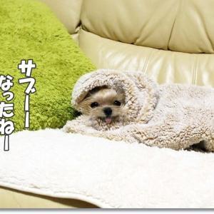 ご利用は計画的に、毛布はお早めに~