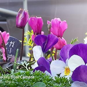 令和カメテク#11 「春をローアングルで」