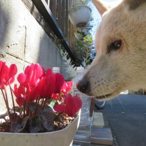 春をローアングルで ~カメラで撮ってみた~