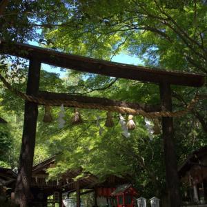 蒼い季節 野宮神社