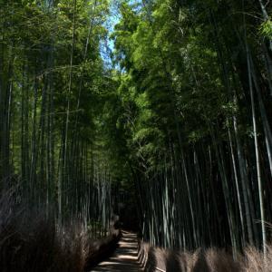 蒼い季節 竹林の小径