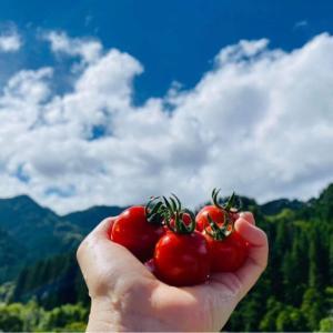 ⭐️ 山の湧き水で大事に育てられたトマト。かつかわ農園さん
