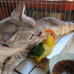 猫に鰹節(笑)
