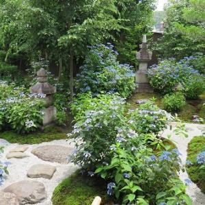 6月の京都にて